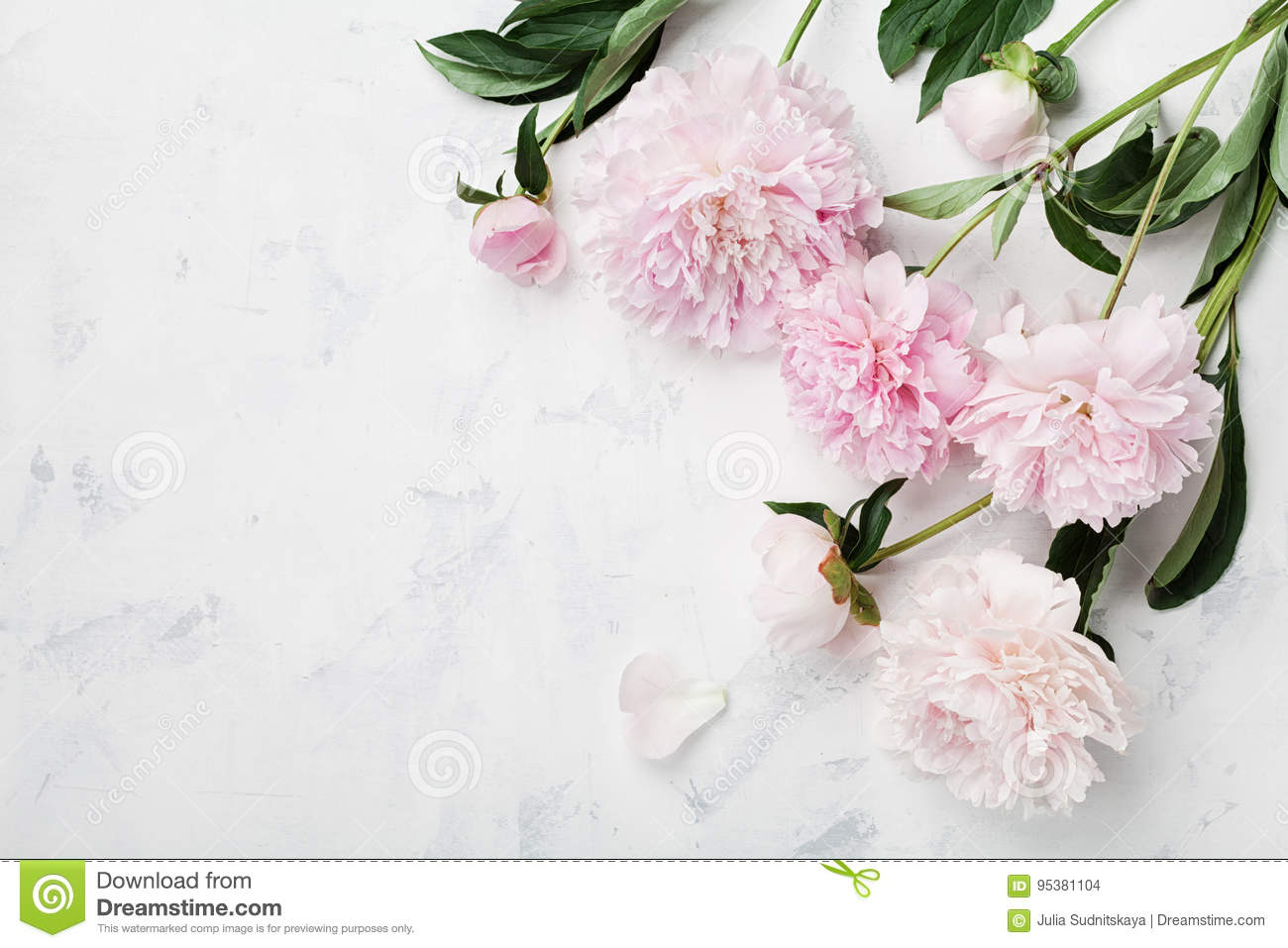 Beautiful Pink Peony Flowers On White Table With Copy