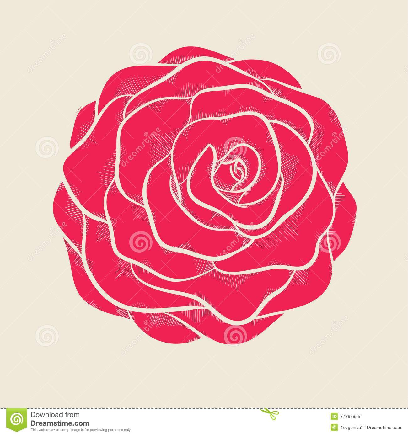 Beautiful Pink Rose In Hand drawn Graphic Style Royalty Free Stock