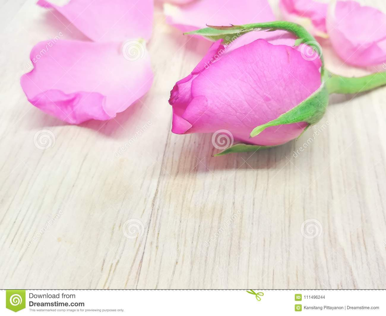 Beautiful Pink Rose Sweet Flower Wallpaper Wooden Background Stock