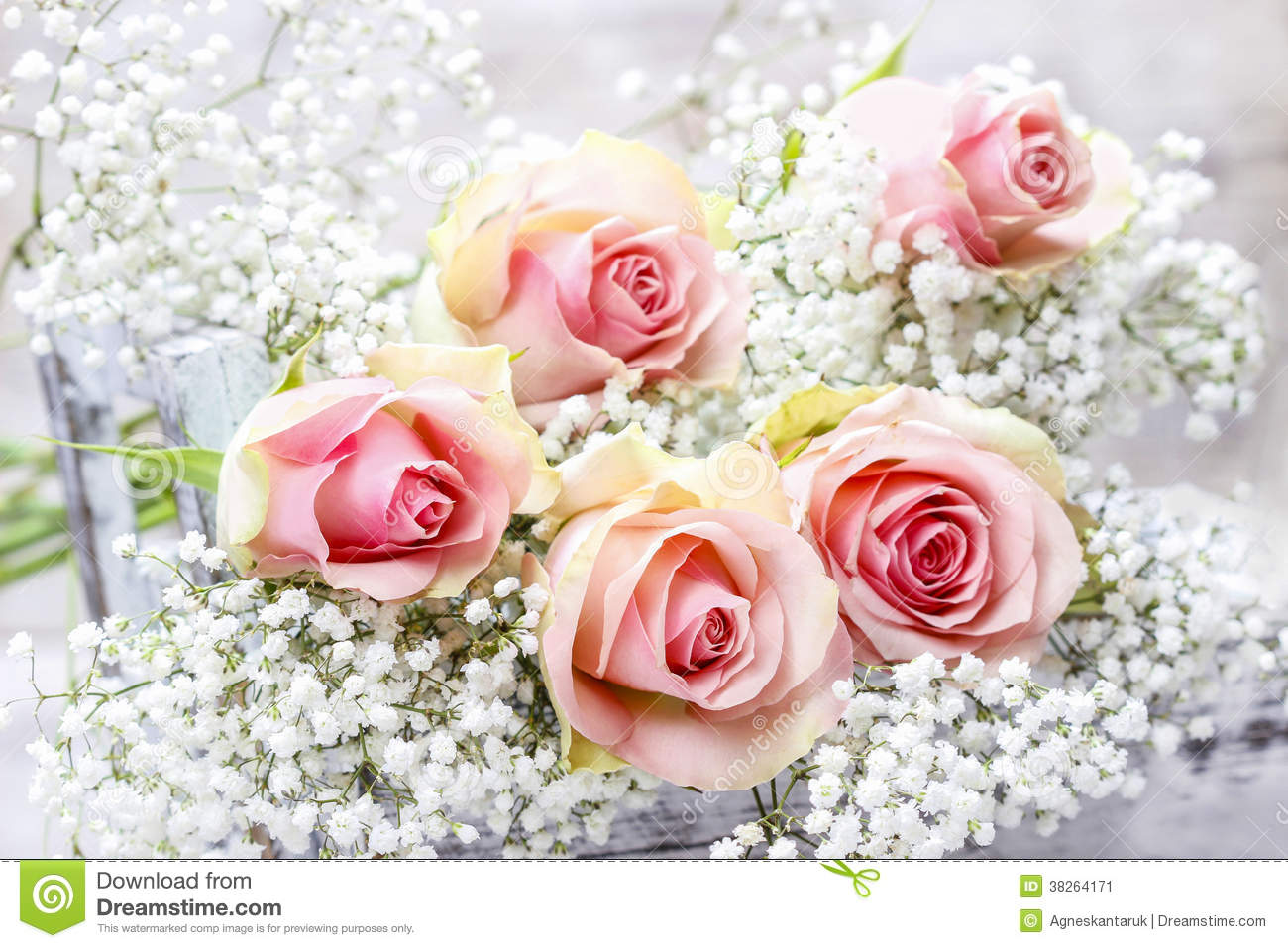 Beautiful pink roses and gypsophila babys breath flowers stock beautiful pink roses and gypsophila baby s breath flowers mightylinksfo