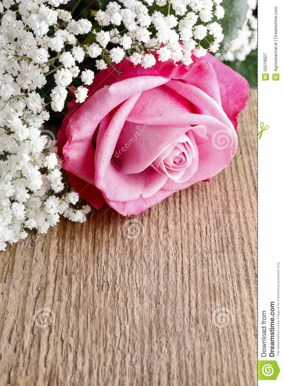 Beautiful Pink Roses And Gypsophila Babys Breath Flowers Stock