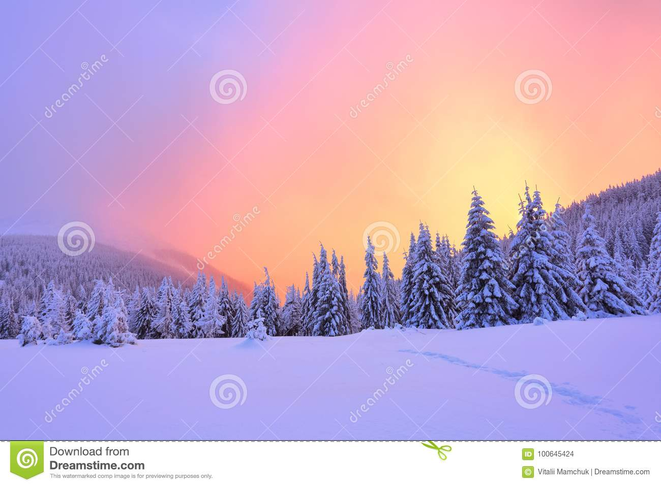 Beautiful pink sunset shine enlightens the picturesque landscapes with fair trees covered with snow.