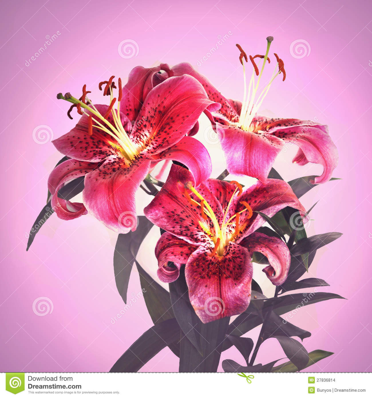 Beautiful pink tiger lily flower stock photo image of flowers download beautiful pink tiger lily flower stock photo image of flowers single 27836814 izmirmasajfo