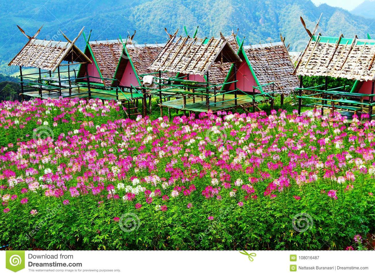Beautiful Pink Violet And White Flowers Field With Wooden Shelters