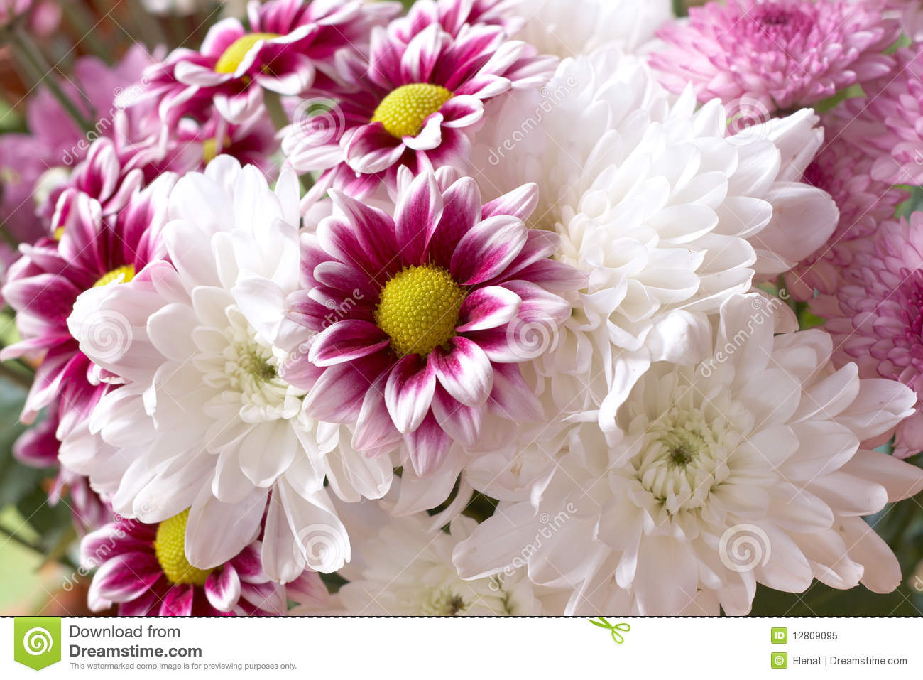 Beautiful pink and white flowers stock image image of occasion beautiful pink and white flowers mightylinksfo