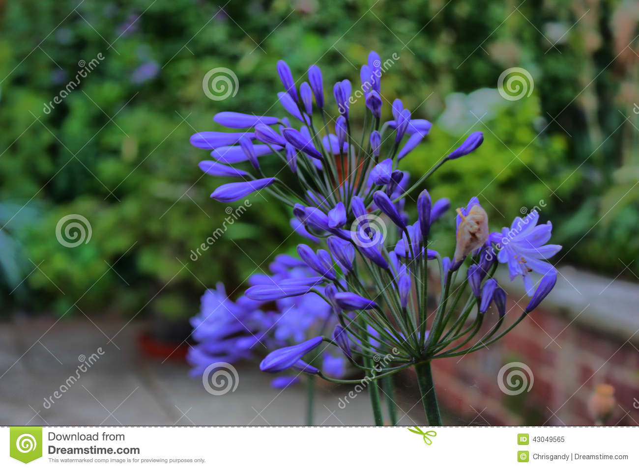 Beautiful Plant With Blue Petals Stock Image Image Of Plants Blue