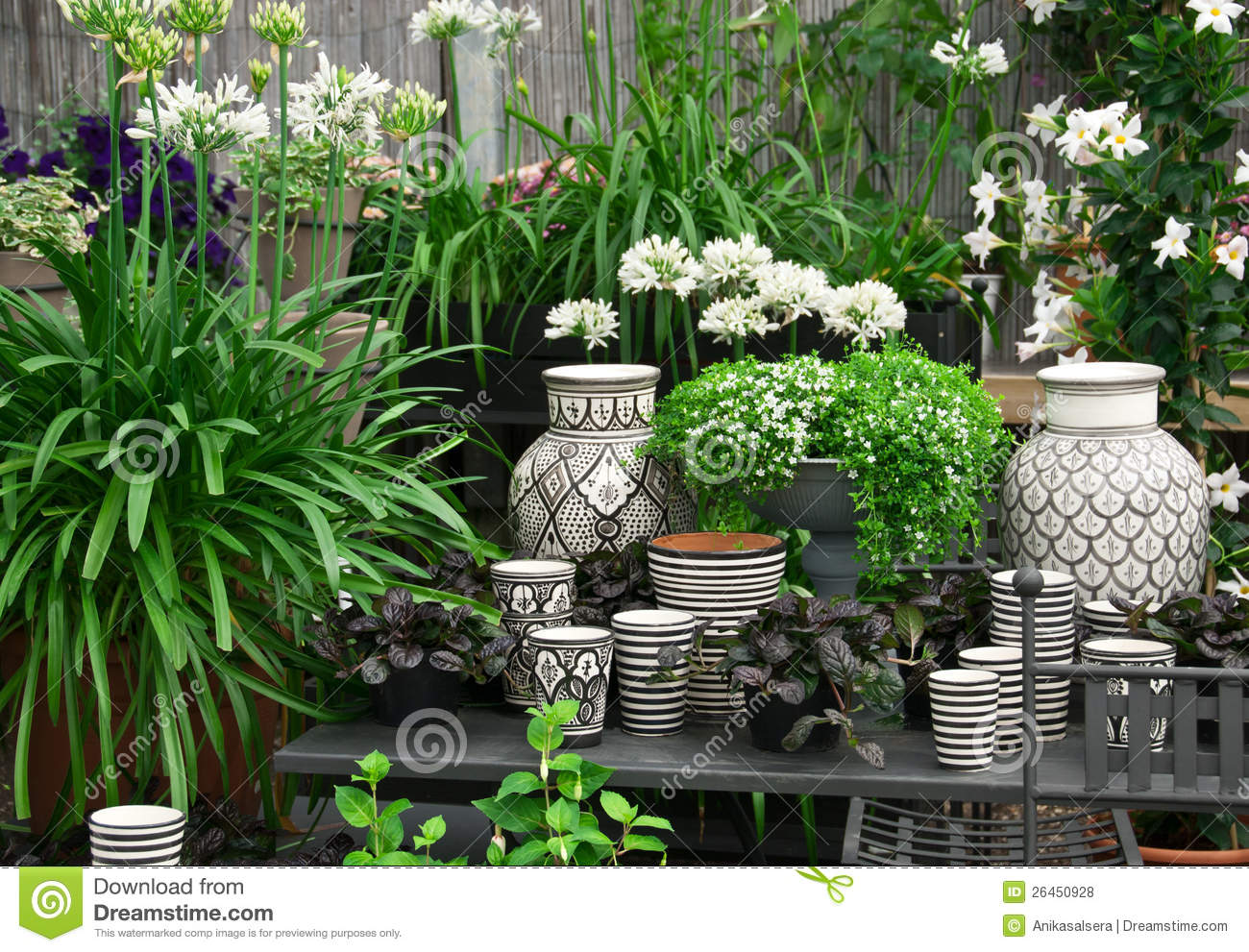Beautiful plants and ceramics in a flower shop stock photo for Beautiful flowers to plant in your garden