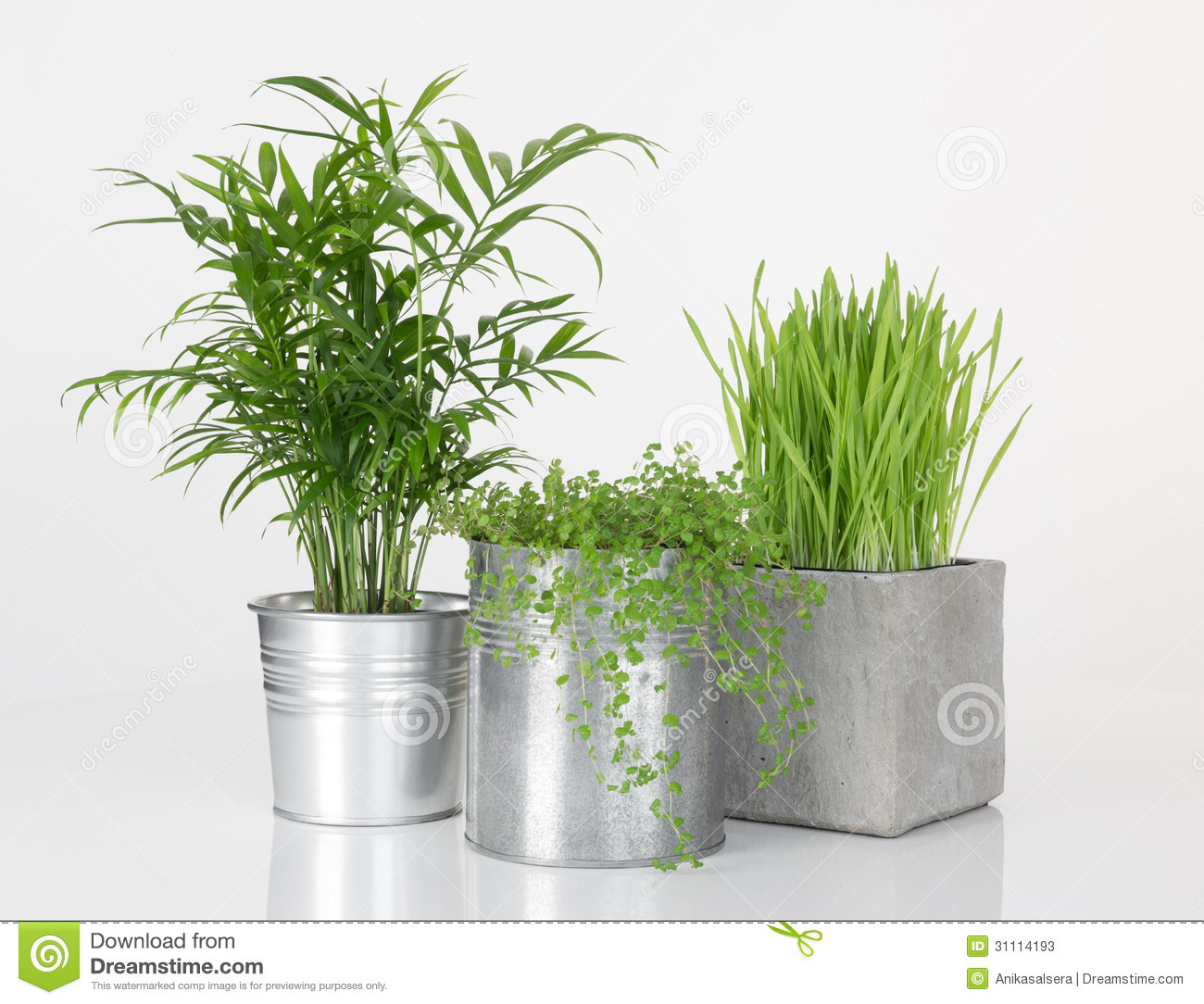 Beautiful Plants In Metal Pots Stock Photos Image 31114193