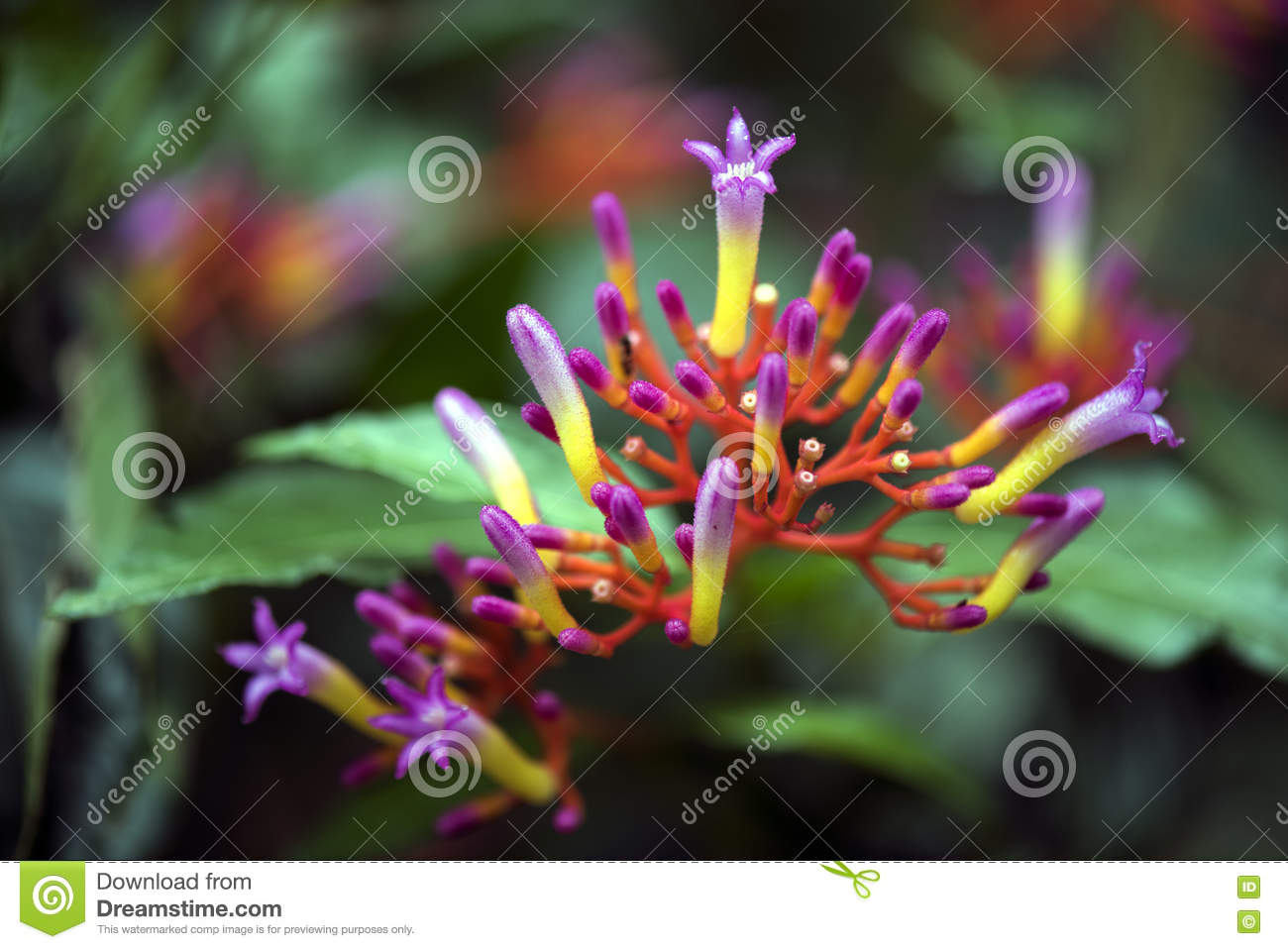 A Beautiful Poisonous Flower In Middle Of The Forest Stock Image