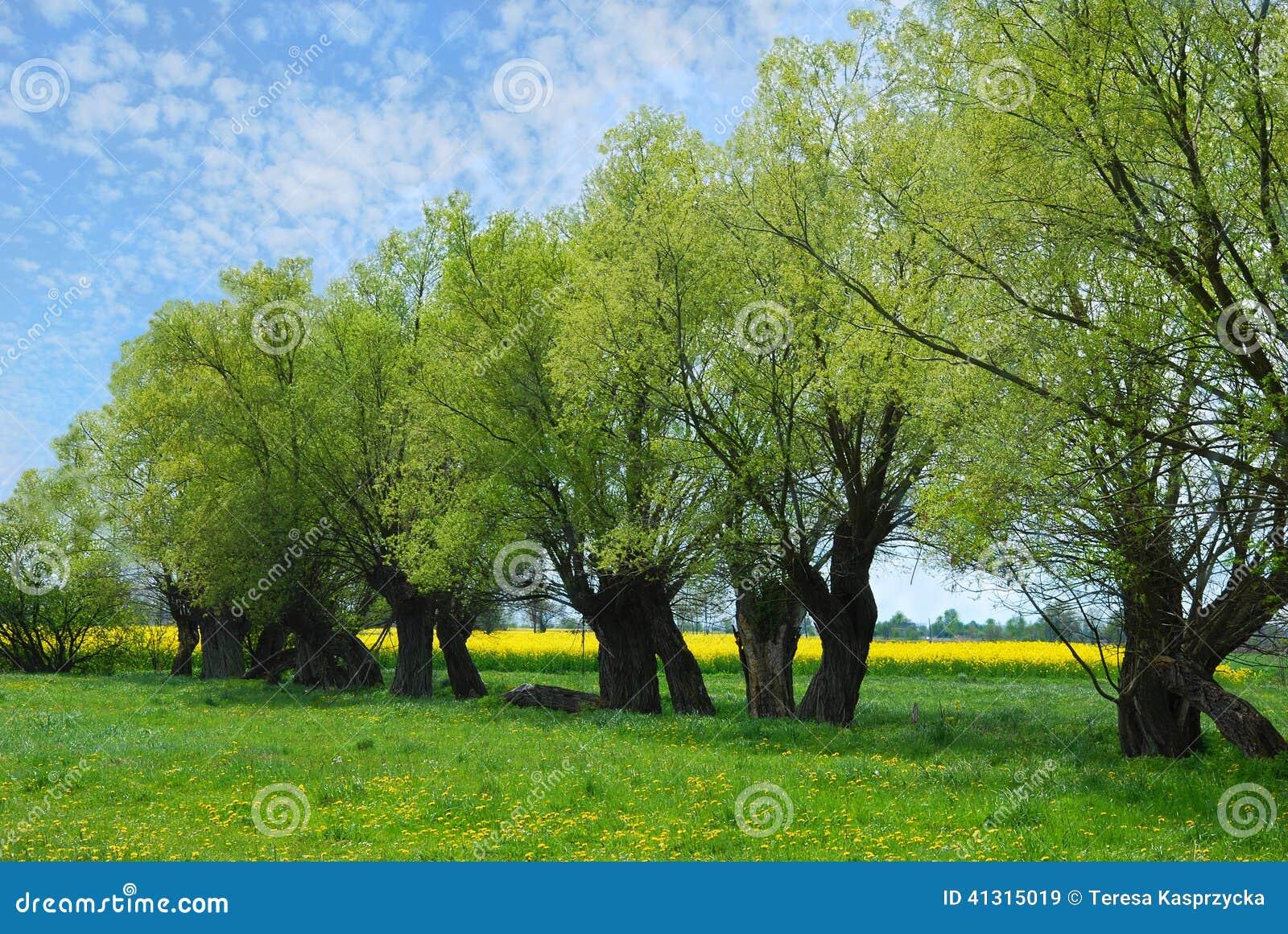 beautiful yellow field landscape - photo #39