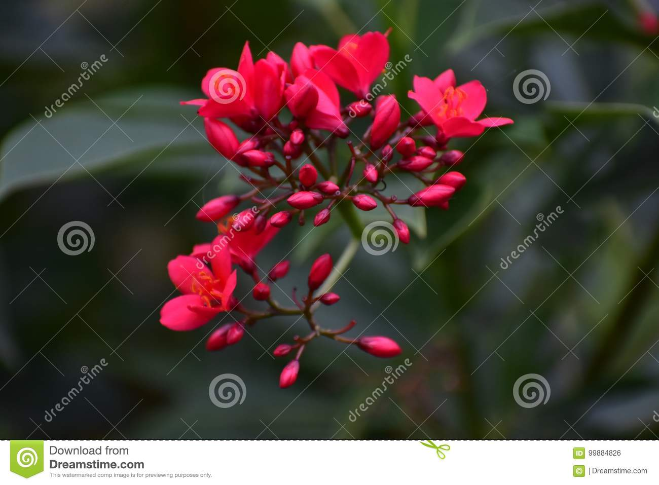 Beautiful Poppy Red Flowers Stock Photo Image Of View Beautiful