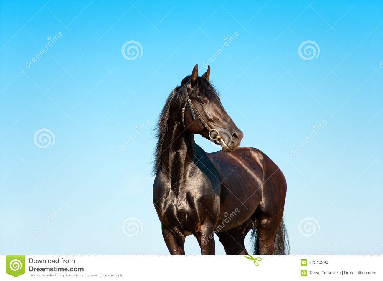 Beautiful portrait of a black horse on a background of sky
