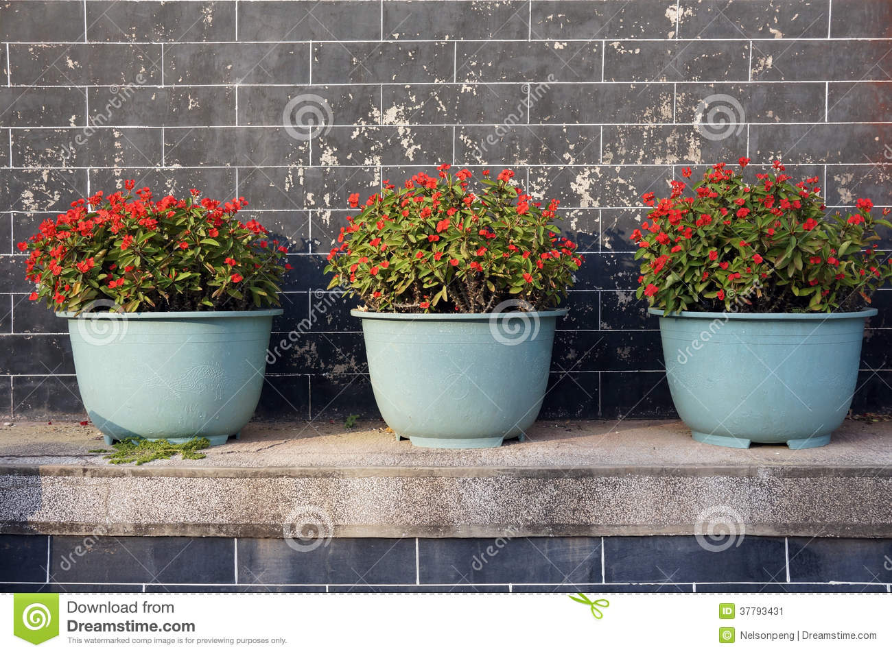 Beautiful Potted Flowers Stock Image Image Of Flowers 37793431