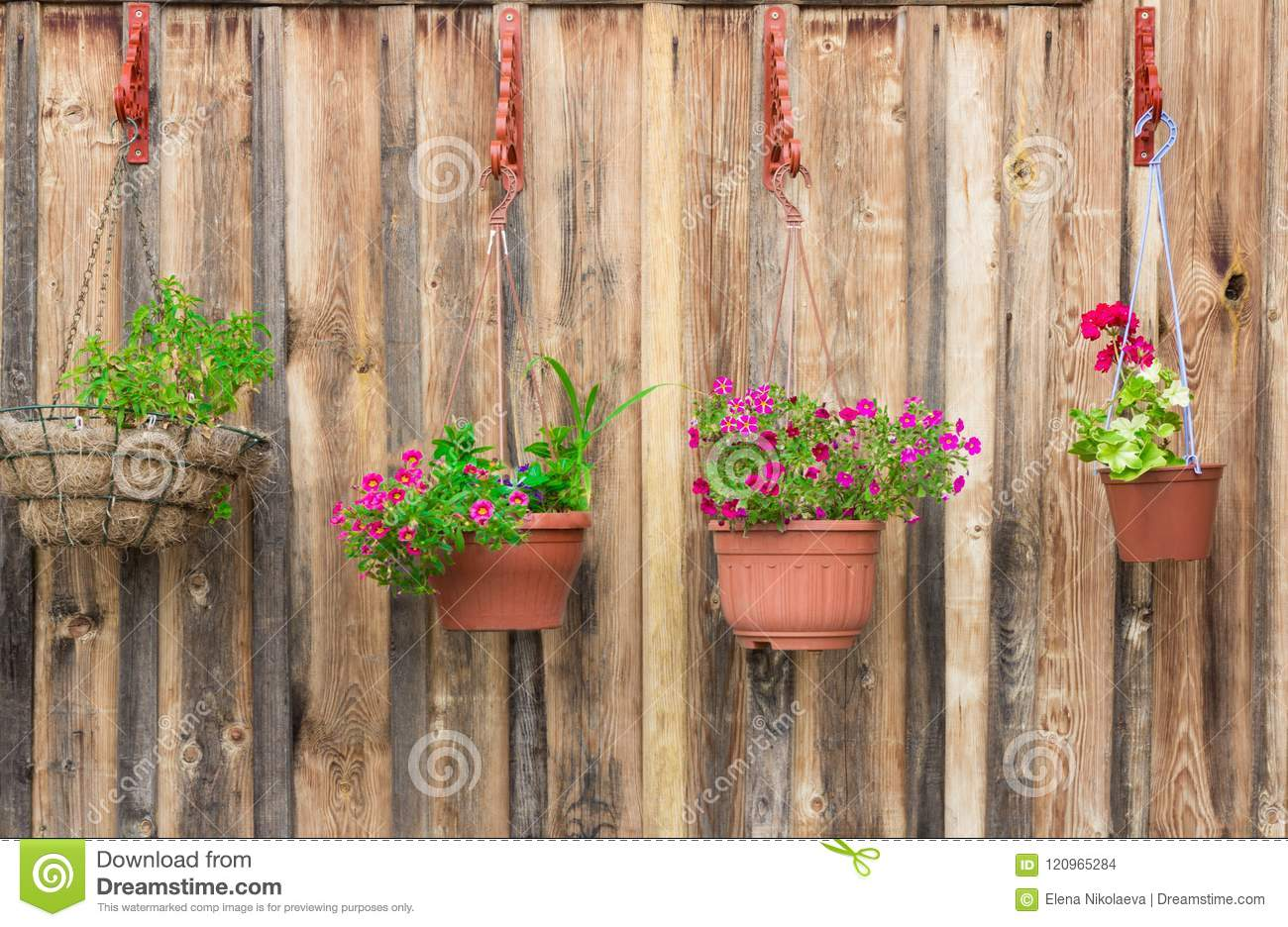 Beautiful Potted Flowers Hanging On Wooden Wall Stock Photo Image