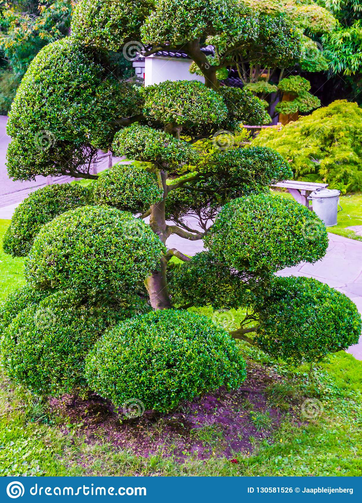Beautiful Pruned Tree With Ball Bushes In Japanese Style Amazing