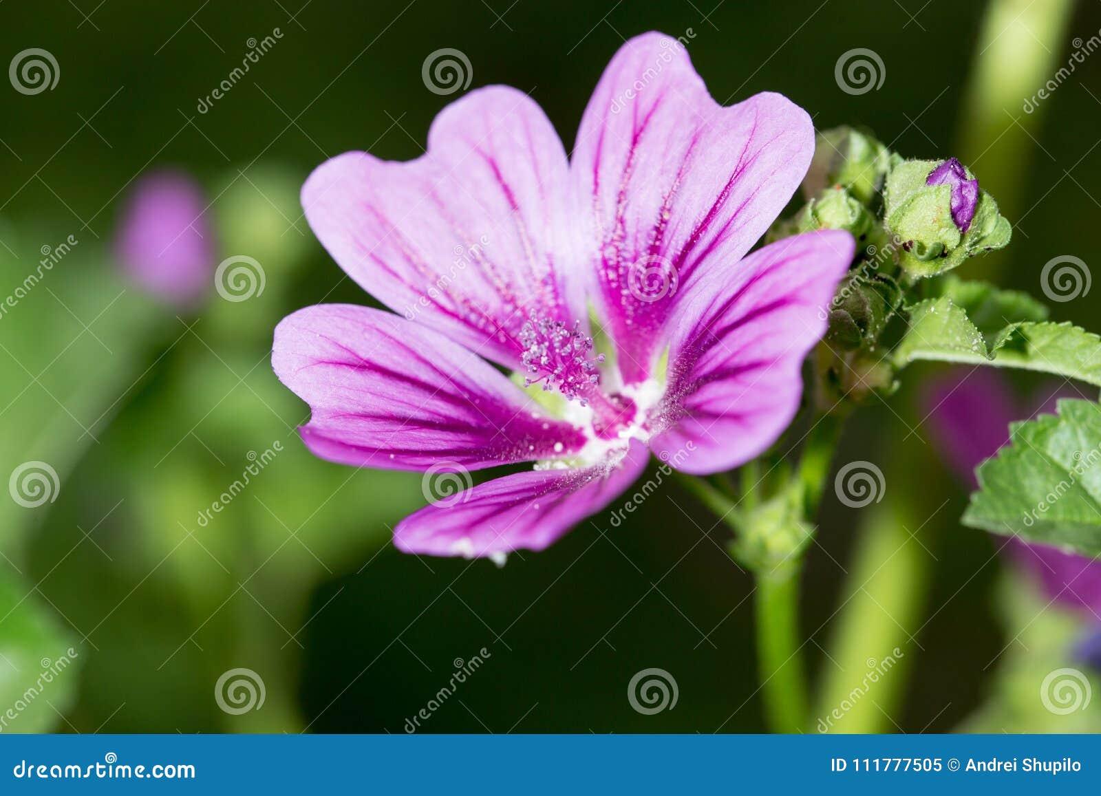 Beautiful purple flower in nature