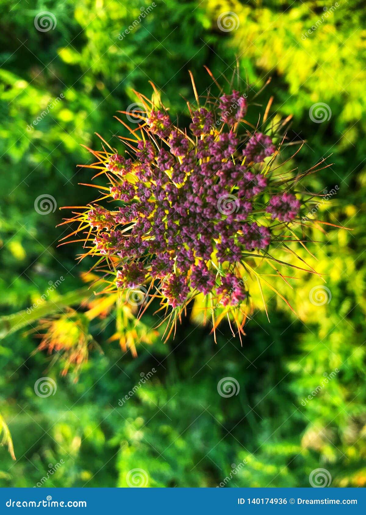 Beautiful purple flower in village