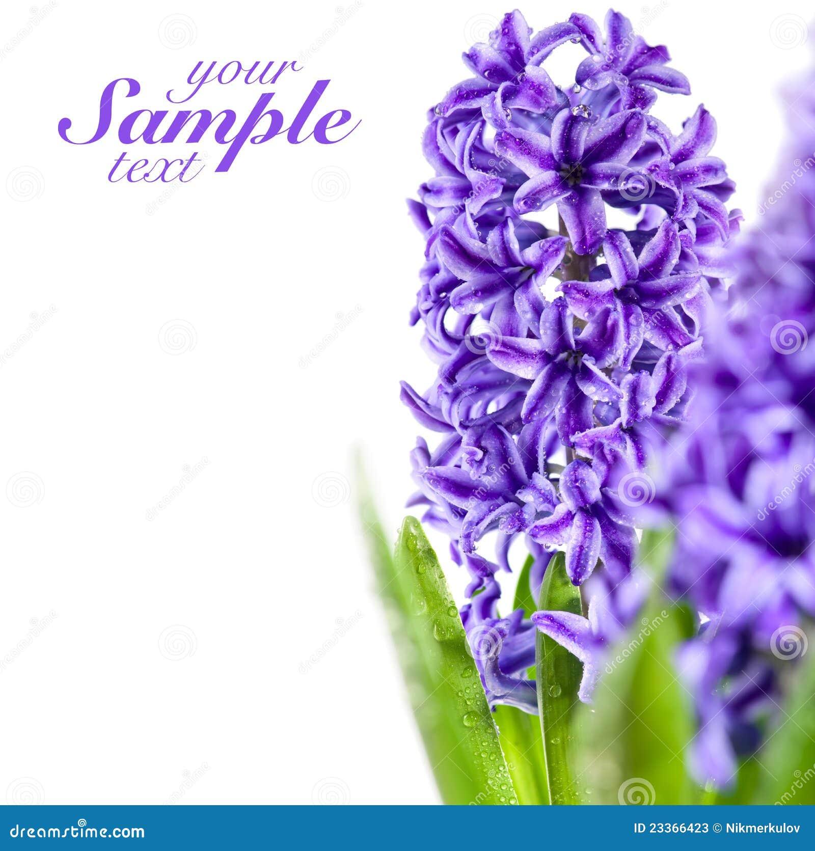 Beautiful Purple Flowers Stock Image Of Natural