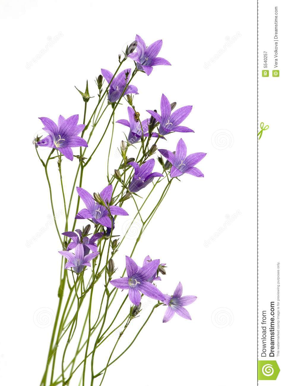 Beautiful Purple Flowers Royalty Free Stock Photography - Image ...