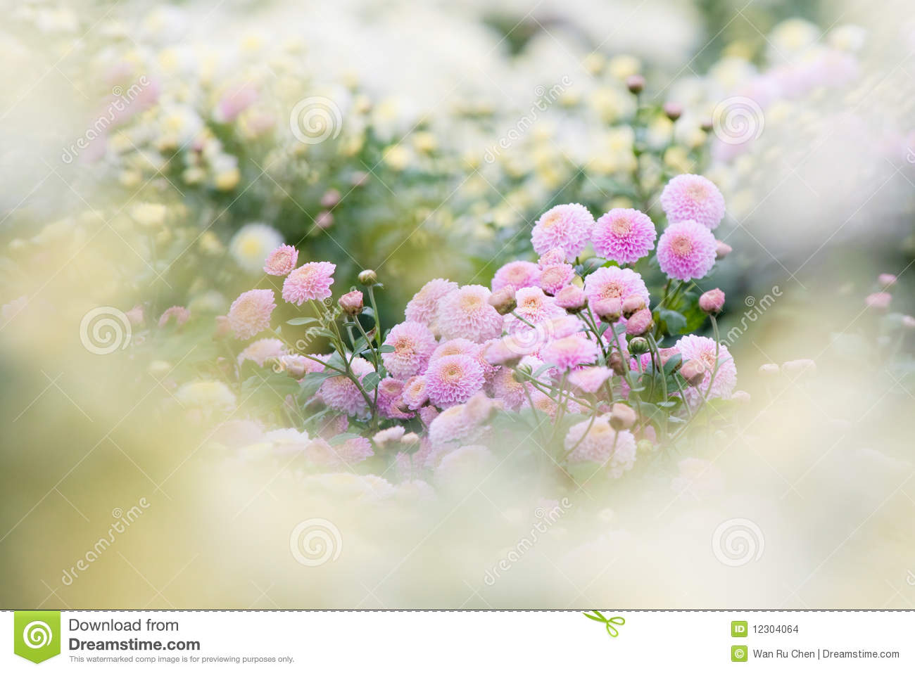 beautiful purple flowers as dream background stock images