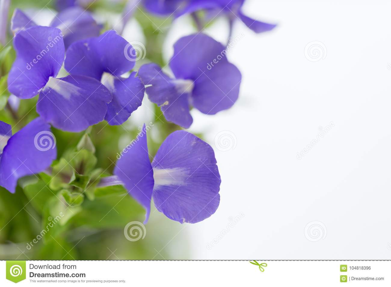 Beautiful purple flowers and fresh green leaves the white download beautiful purple flowers and fresh green leaves the white background is the top view izmirmasajfo