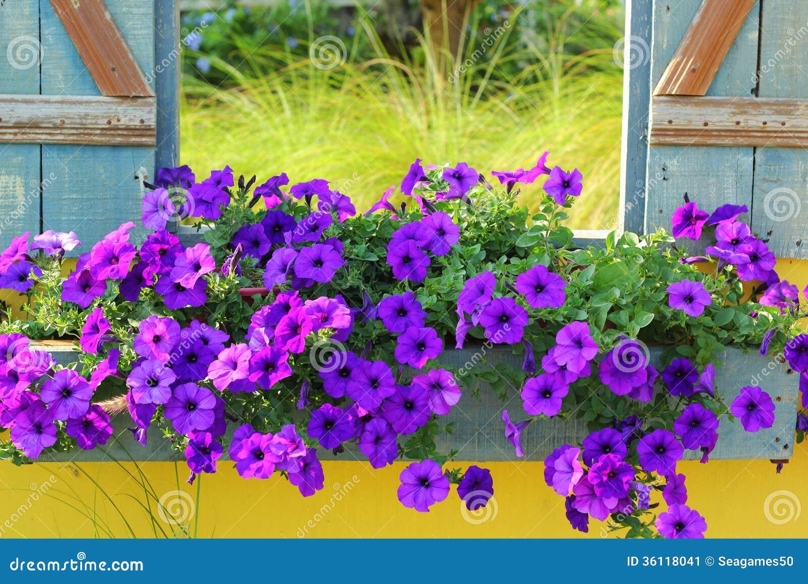 Beautiful Purple Flowers On Old Wood Vintage Window
