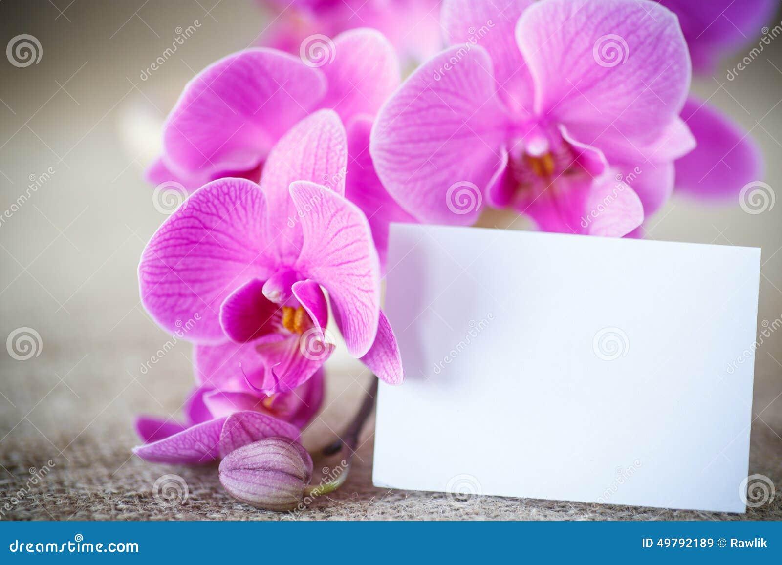 Beautiful Purple Phalaenopsis Flowers Stock Photo Image