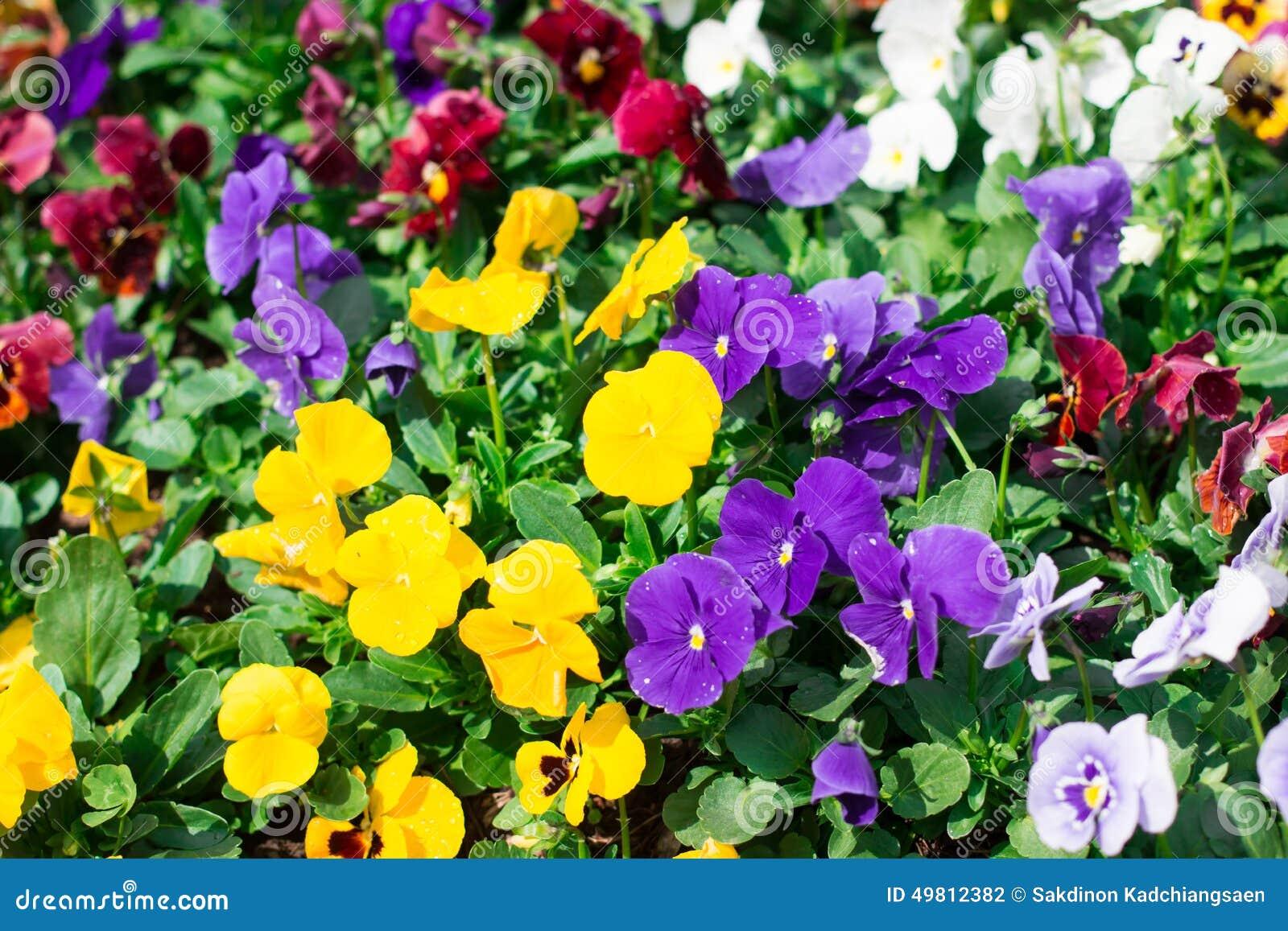 Beautiful Purple And Y...