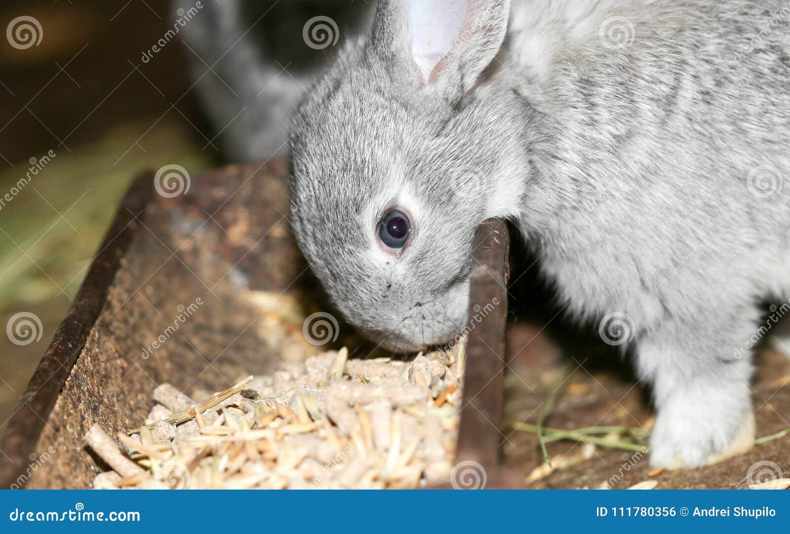 Beautiful rabbit on the farm