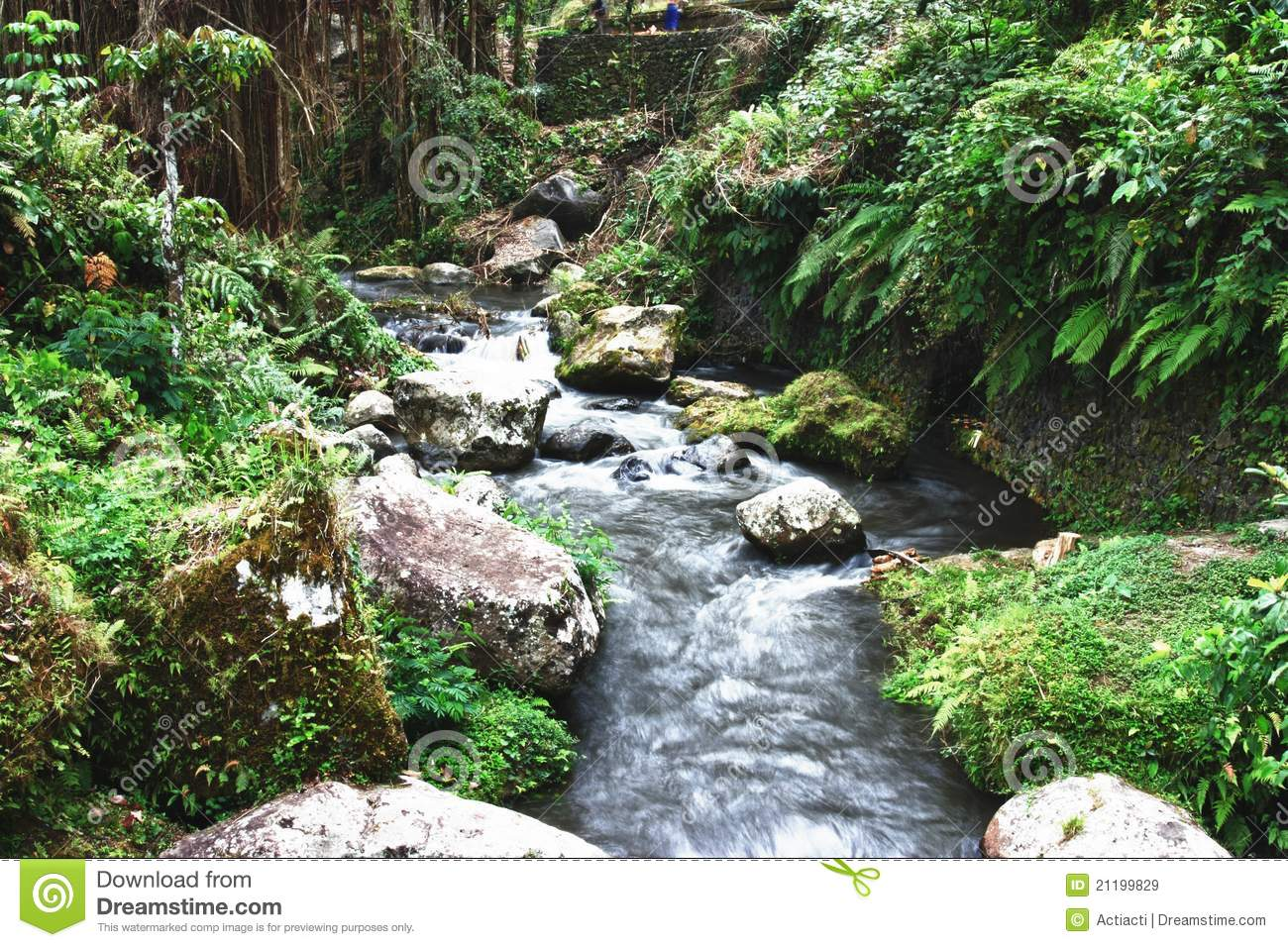 Beautiful Rain Forest Royalty Free Stock Images - Image: 21199829