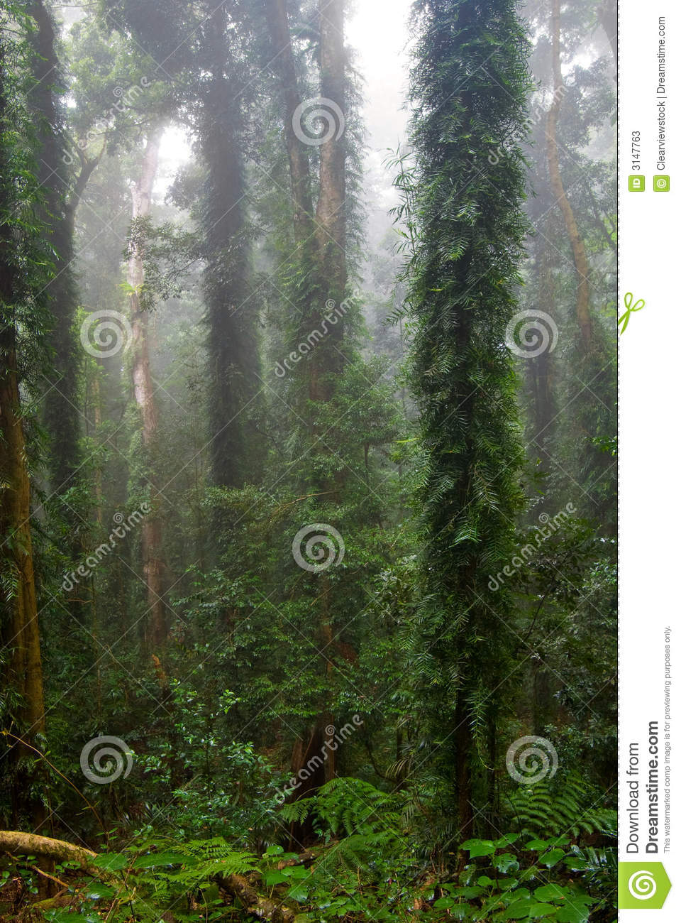 ... of nature in the dorrigo world heritage rainforest on a foggy day