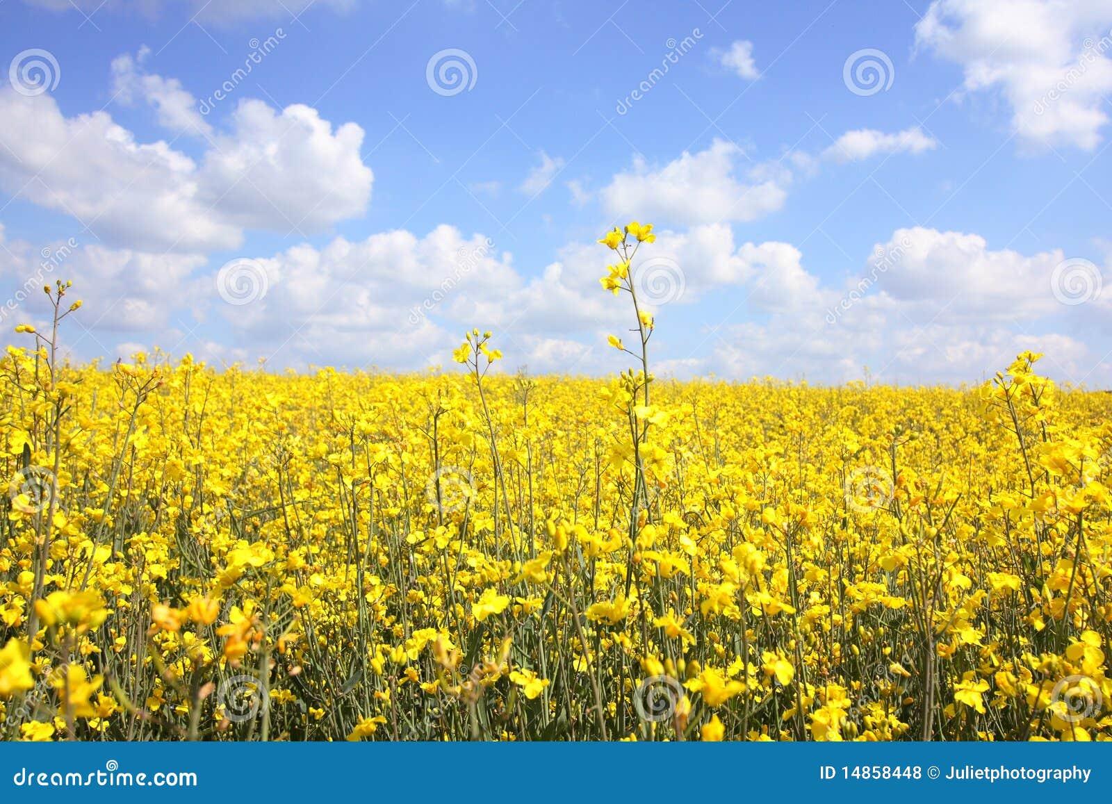 Beautiful fields close up
