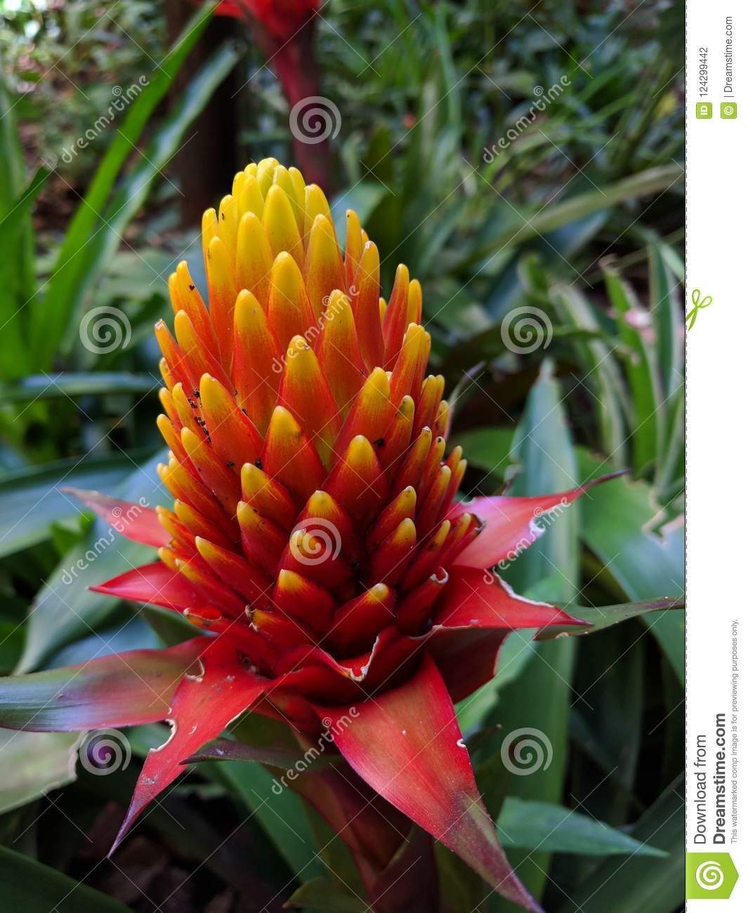 Beautiful And Rare Flower Colors Stock Photo Image Of Rare Leaves