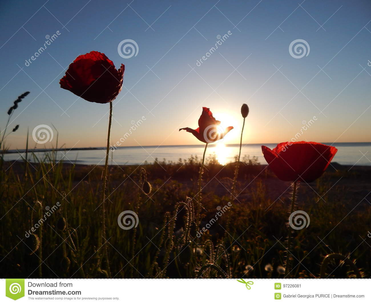 Beautiful Real Sunrise At The Black Sea Stock Image Image Of Poppy
