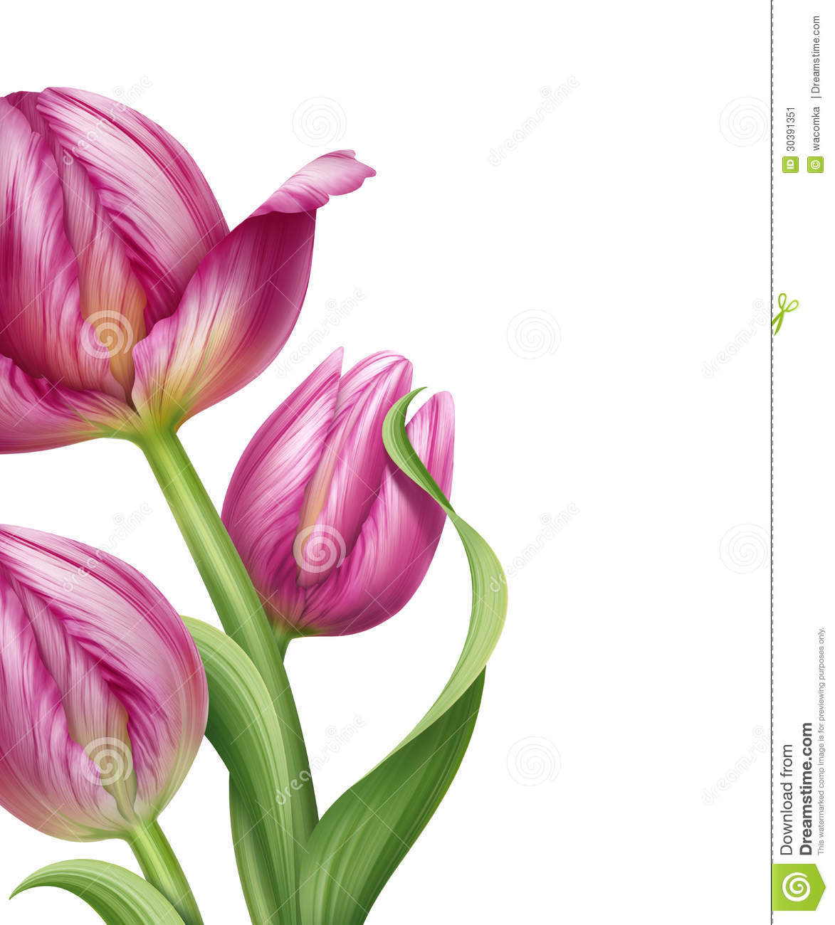 Beautiful Realistic Pink Tulips Flower Illustration Stock ...