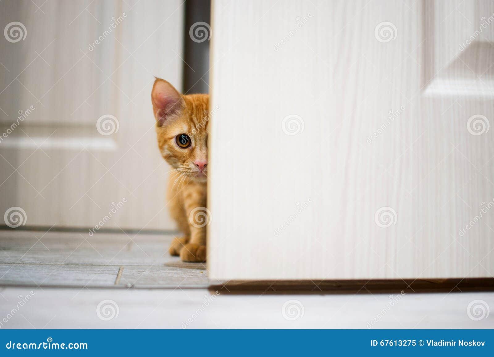 Behind the white door - 2 8