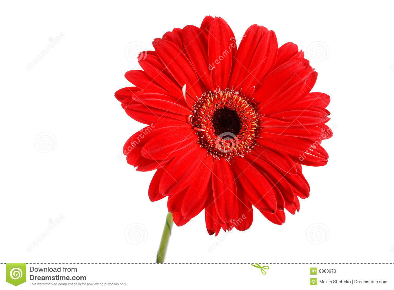 Beautiful red flower stock image image of background 8800973 beautiful red flower izmirmasajfo Choice Image