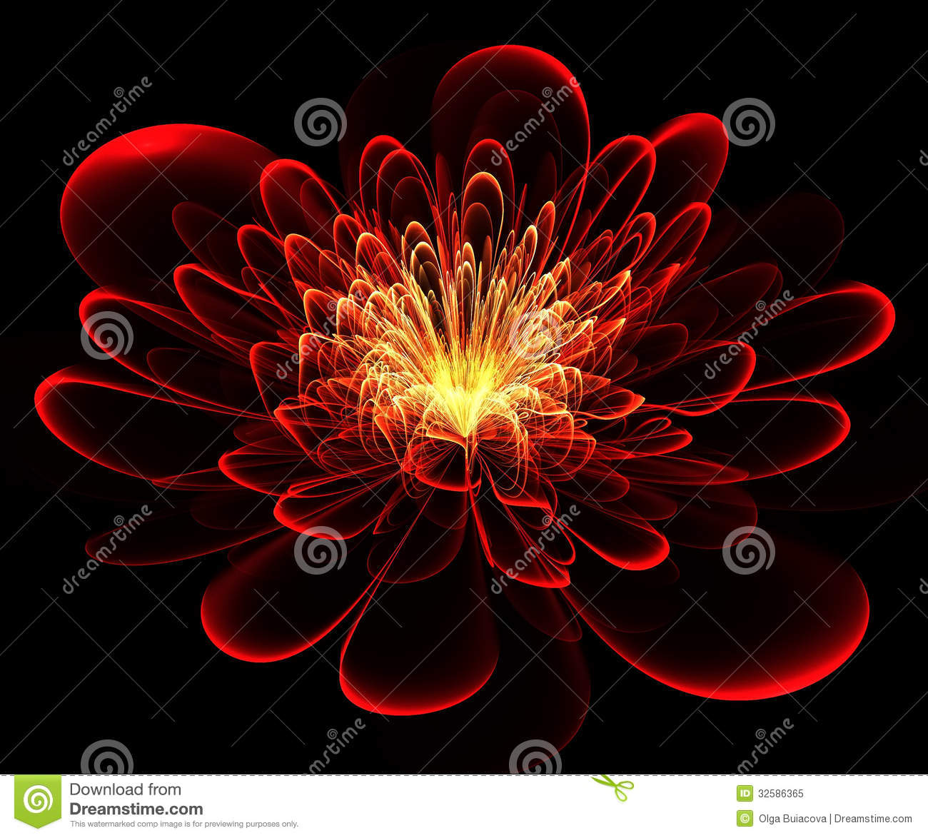 Beautiful Red Flower On Black Background. Stock ...