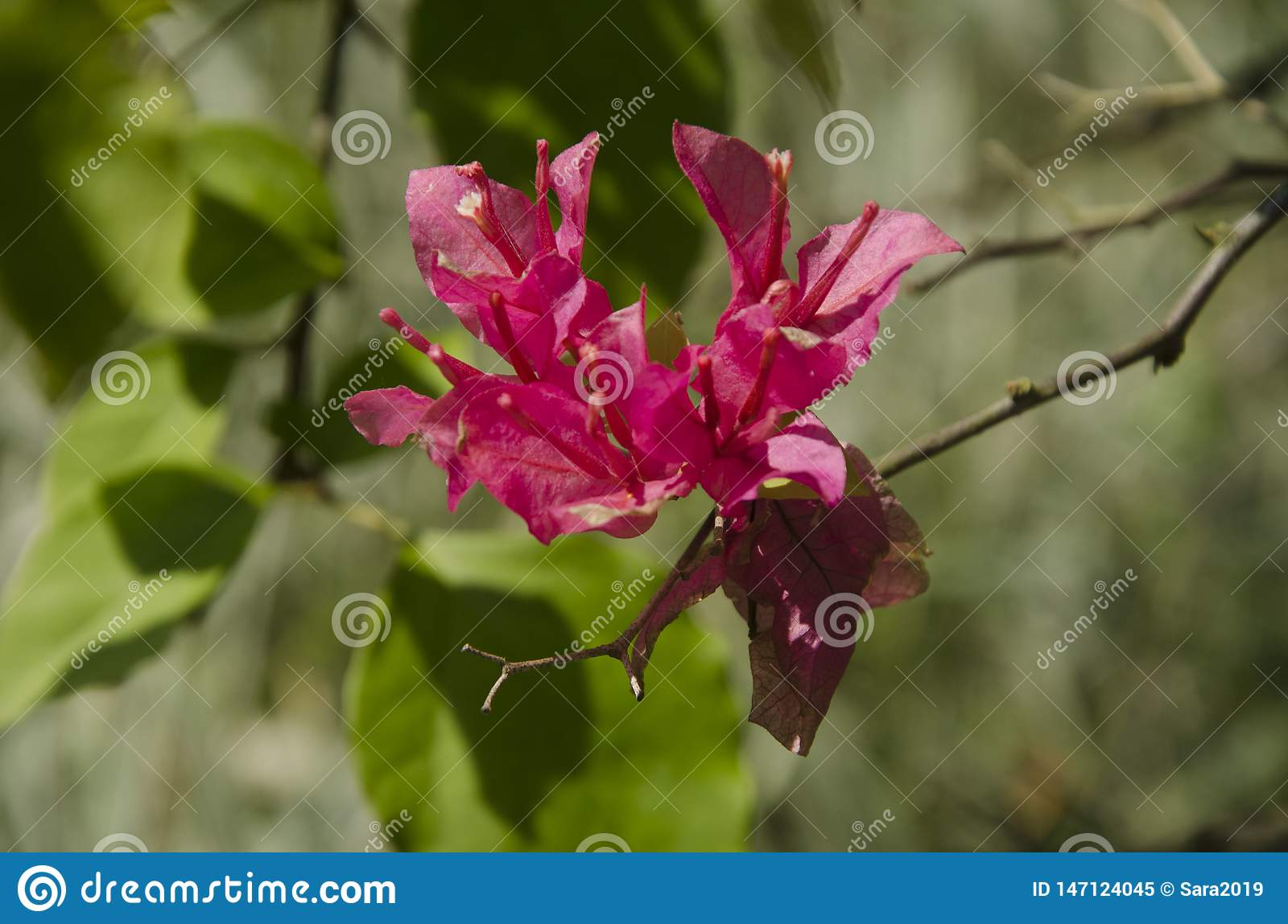 A beautiful red flower on a branch