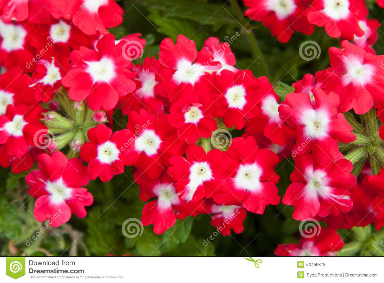Beautiful Red Flowers At Summer Garden Stock Photo Image Of Floral