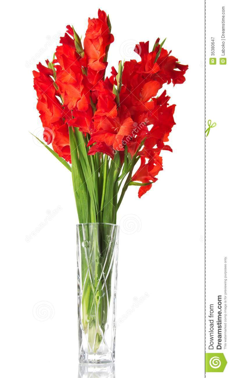 beautiful red gladiolus in vase royalty free stock us map clip art with mexica us map clipart black and white