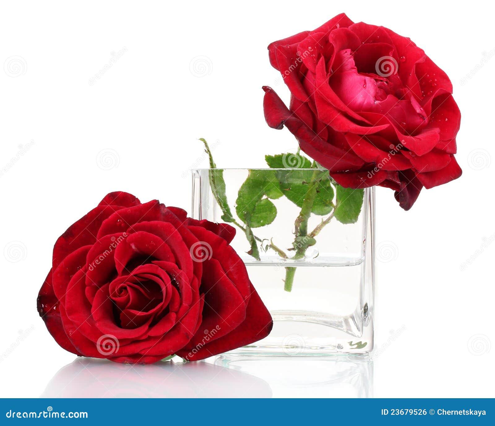Beautiful red rose stock photo image of celebration 23679526 beautiful red rose izmirmasajfo