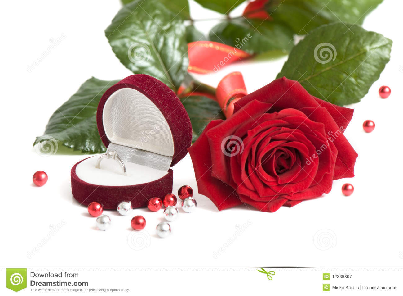 beautiful red rose for day valentine as gift stock photography, Natural flower