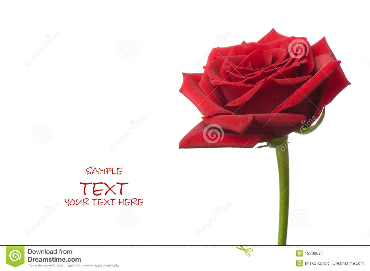 Beautiful Red Rose For Day Valentine As Gift Stock Image Image Of