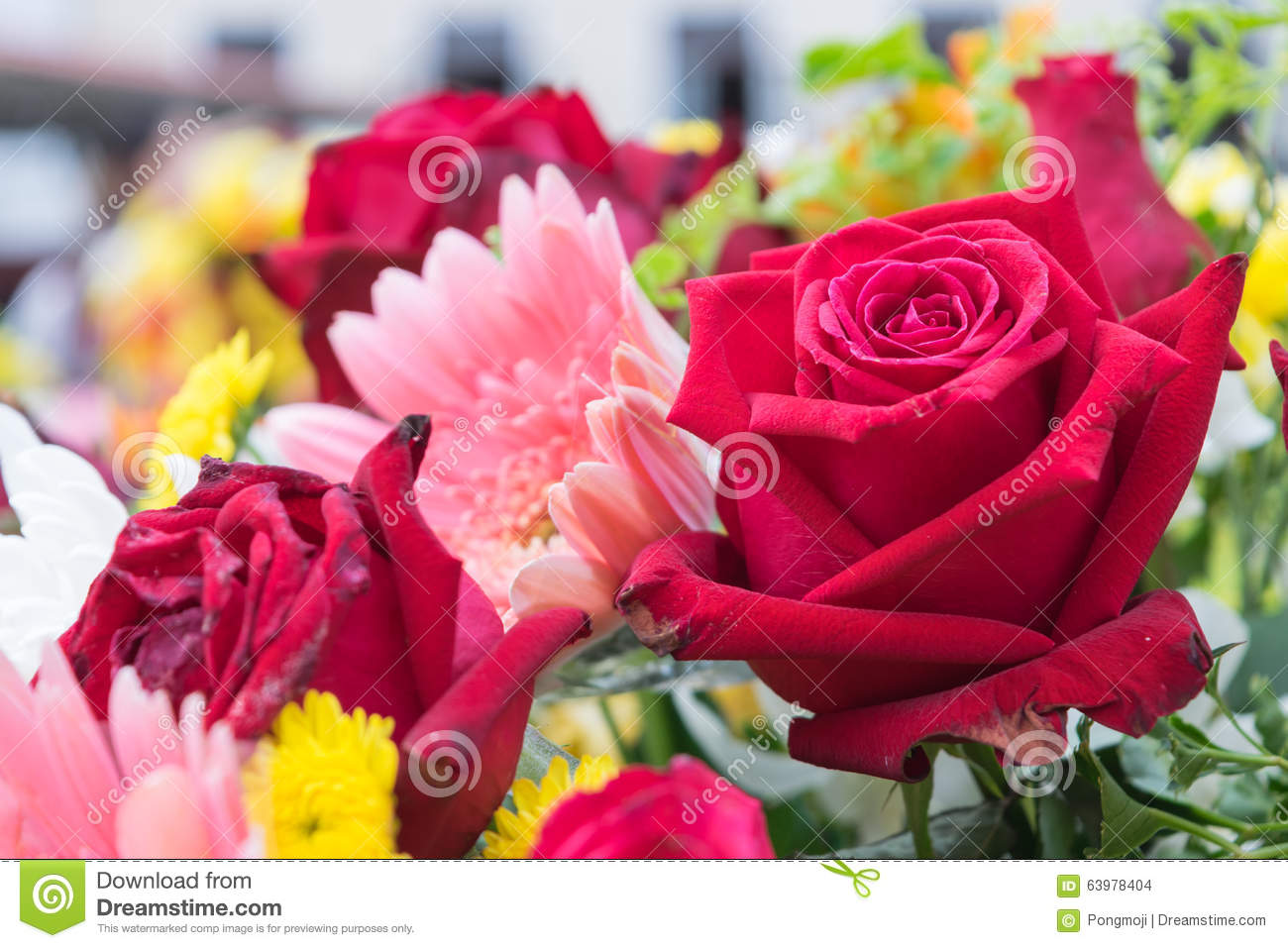 Beautiful Red Rose Flower In A Bouquet Stock Photo - Image of petal ...