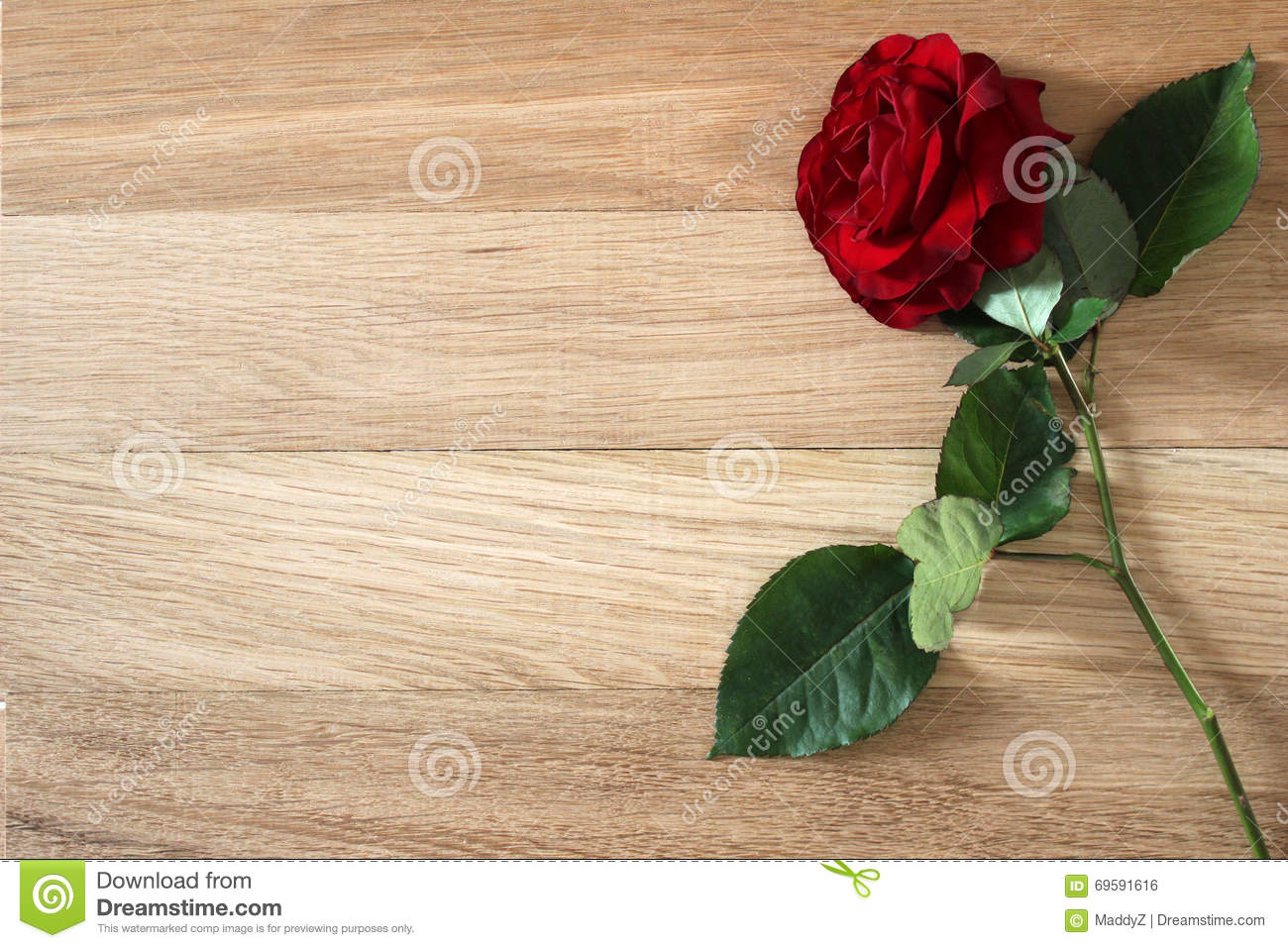 Beautiful Red Rose Flower With On Rustic Wood Background