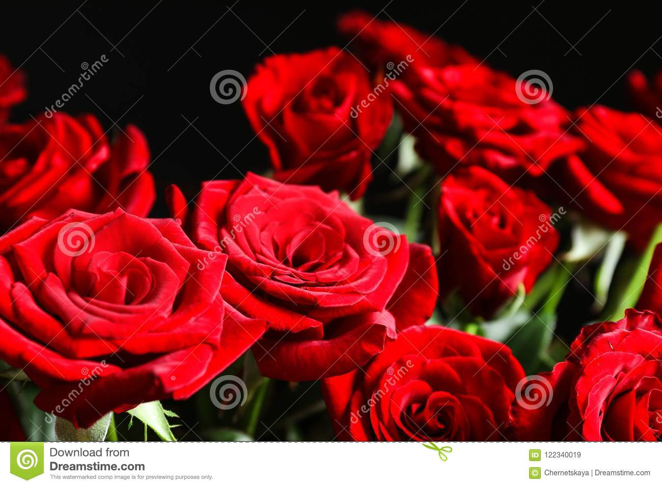 Beautiful Red Rose Flowers Stock Image Image Of Bloom Blossom