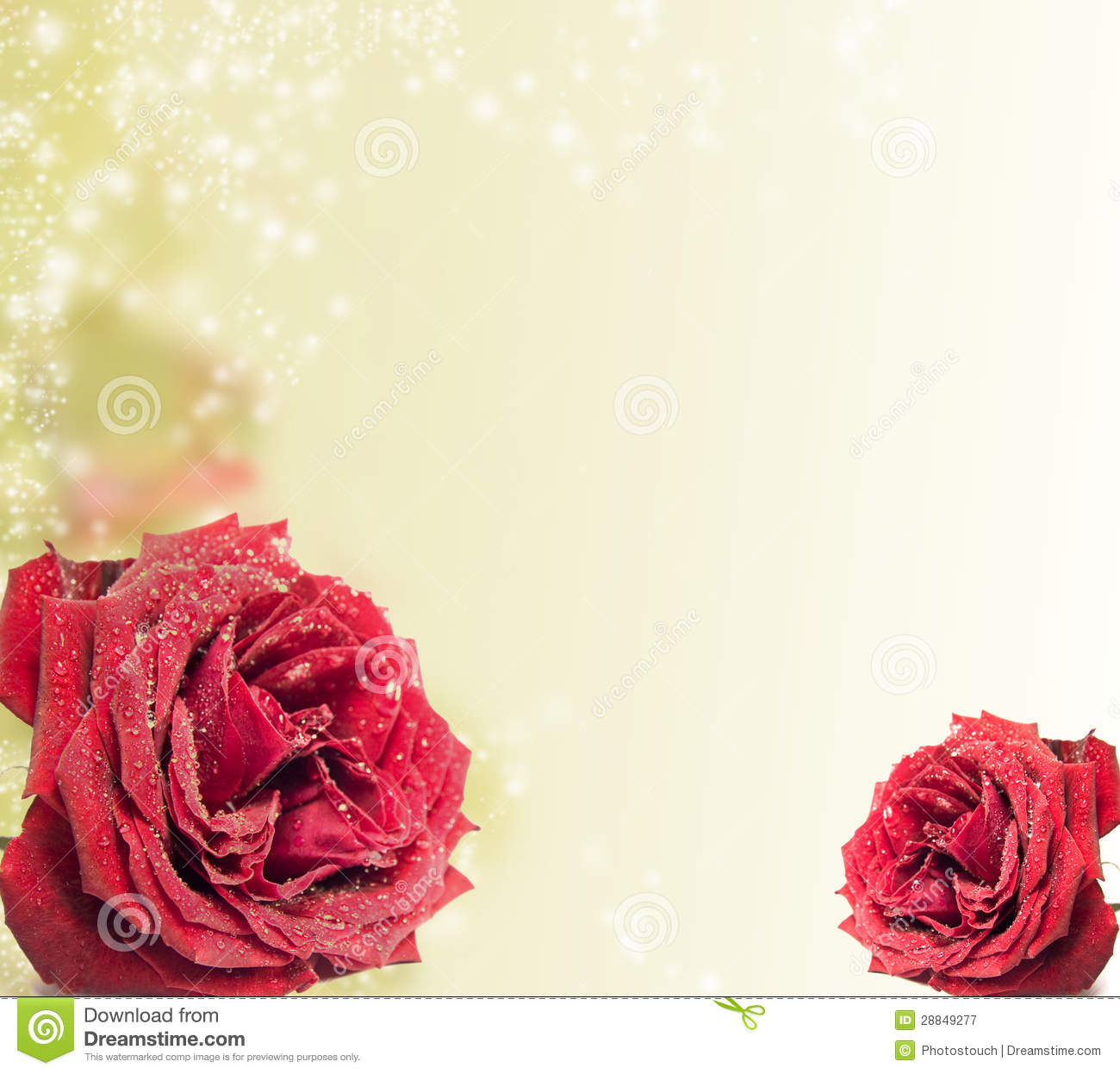 beautiful red rose on magical background stock