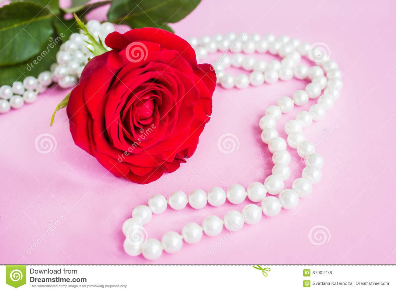 Beautiful Red Rose With Pearl Stock Photo - Image of gift ...