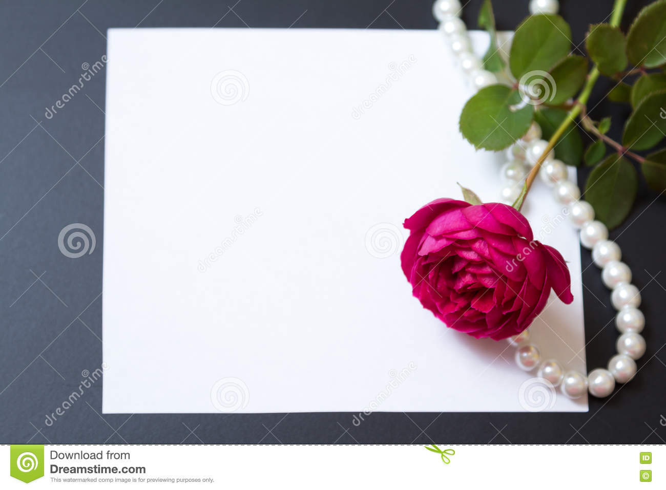 Beautiful Red Rose With Pearls On Blank White Sheet Paper ...